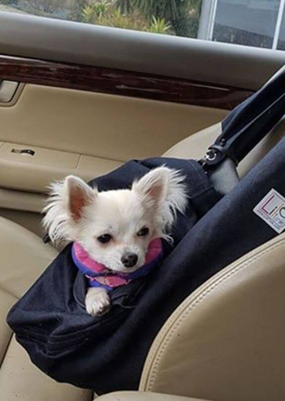 nosidełka dla psa online