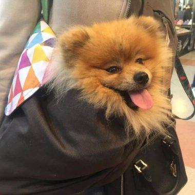 nosidełko dla psa