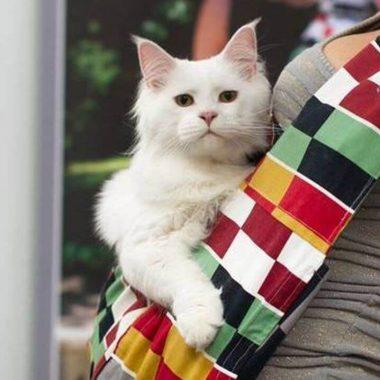 torba dla kota Maine Coon
