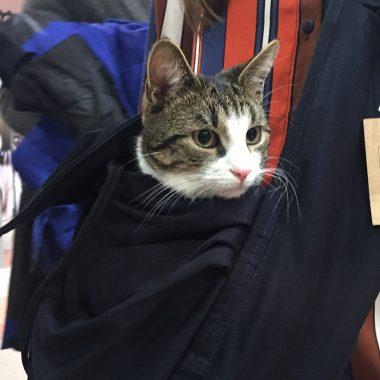 nosidełko dla kota